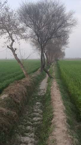 Land for sale Bahawalnagar