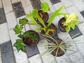 Plants for sale