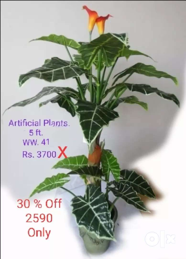 artificial plants n many more 0