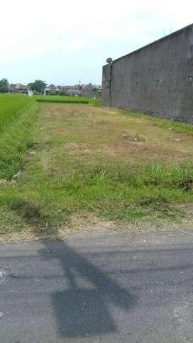 Tanah pekarangan dibarat UAD terpadu