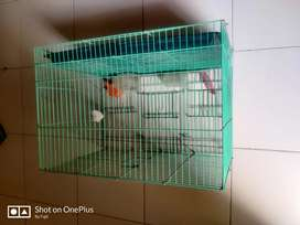 Bird cage for pet