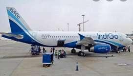 Airlines job open urgent hiring indigo jobs