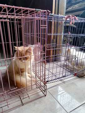 Melayani grooming&penitipan kcg direwwin murmer