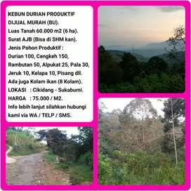 Jual Tanah Kebun Durian Duren dgn View Pegunungan Indah 60.002 m2.