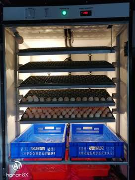 Fully automatic Incubator capacity up to 50000eggs