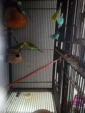 Parrot Cage Heavy duty