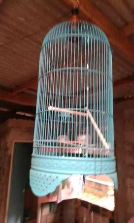 Jual Kandang lovebird like new