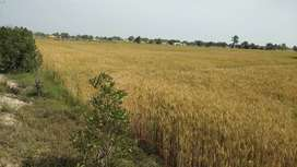 95 murabba ( 2375 Acres ) Government Army allotted agriculture lands