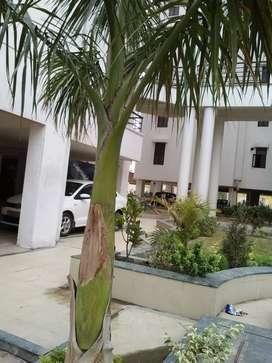 Four bhk flat for sell in rudra tower sundarpur Lanka varanasi