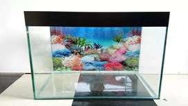Aquarium baru dijamin rapi