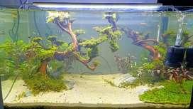 Jasa pasang aquascape aquarium all tema