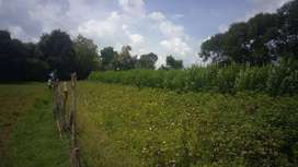 6.09 acres agriculture plain land for sale in Kabini, Mysore.