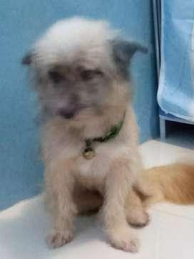 Anjing Lucu Ras Maltese