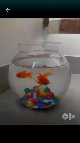 Fish tank bowl only 499