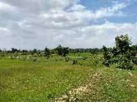 30000 sqft farm land rs 21 lac only,  electricity water provided