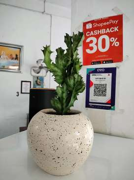 kaktus tambah pot