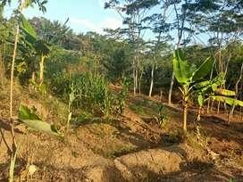 Jual tanah murah pinggir jalan gunungpati