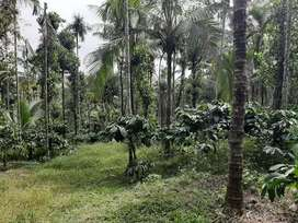 1 acre house  plot site in Mananthavady