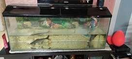 Fish tank along with fish