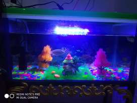 Fish aquarium with stand and 10 pc fish rs 3800