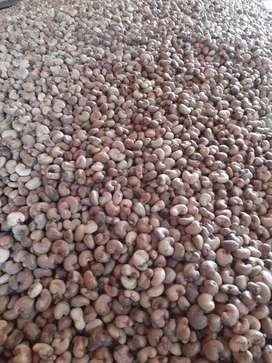 Kacang Mete Kulit Gelondong