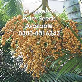 All types of Palm seeds and other plant tree seeds