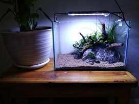 aquascape mini / aquascape / akuarium / aquarium / akuarium murah