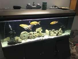 Fish Aquariaum