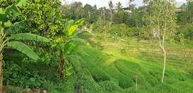 Mencari Pekerja Bidang Perkebunan