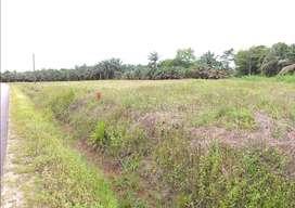 Dijual Tanah Area Perkebunan Kelapa Sawit