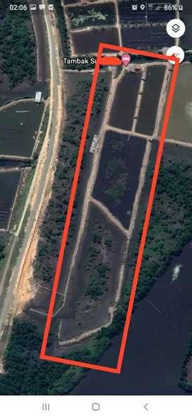 Di jual tambak/kolam udang, kepiting, ikan ukuran 2 Hektar lebih..