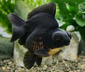 Fish stock arrived in reasonable rates