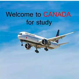 we need visa counsellor only for girls