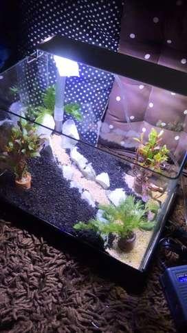 aquarium akuarium aquascape bending kaca fullset