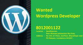 Wanted Wordpress Developer