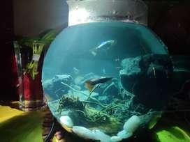 Aquarium and aquascaping