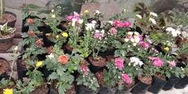 Tanaman bunga indah