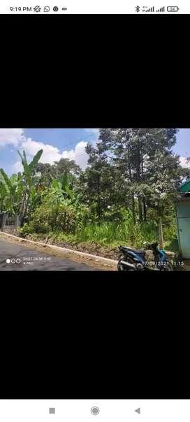 Jual Kebun Durian jumantono