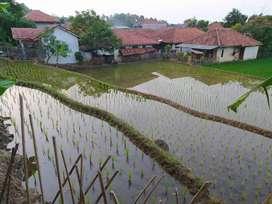 Tanah sawah 45 tumbak
