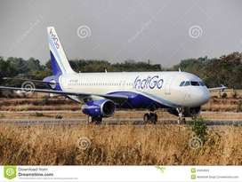 • Female Cabin Crew/Air-hostess for Leading Domestic Airlines  • Guest
