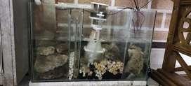 Skimmer for sale