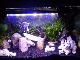 Aquarium 40x30x30