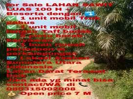 Lahan Sawit 100 H