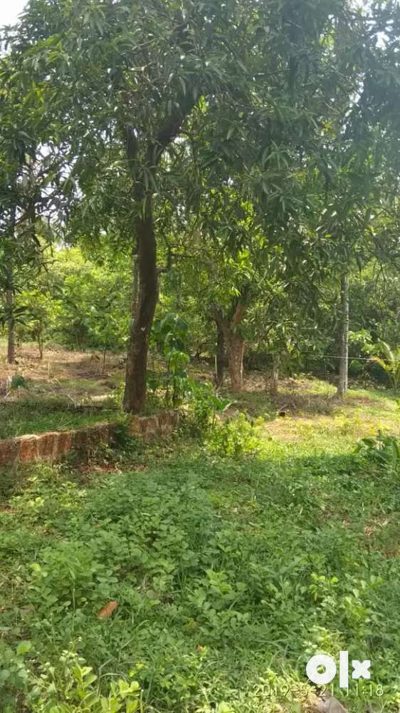 a 16 cents of property with greenary area