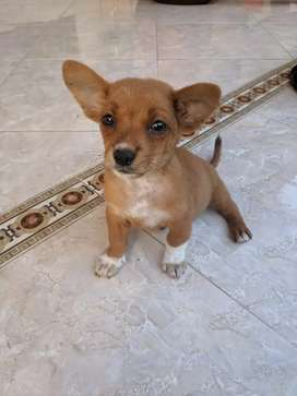 Anjing Mix Size Mini