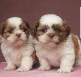 All breeds puppies available