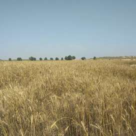 25 ACRES AGRICULTURE LAND NEAR MULTAN