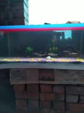 Fish tank & shark fish