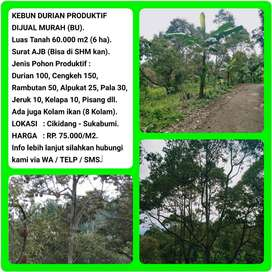 Dijual Murah Kebun Durian Dengan View Indah, Luas 6ha