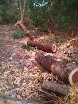 Jual kayu trembesi